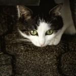 【社会】猫の名誉駅長「ばす」引退…「らぶ」へ交代 会津鉄道芦ノ牧温泉駅