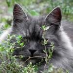 【動物】ガリガリに痩せた捨て猫を保護→モフモフ猫に成長 海外で話題に