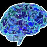 """【科学】悪人の脳は善人と比べて""""かなり小さい""""ことが判明 悪人になるかならないかは生まれつき"""